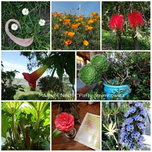 CA flower sampler