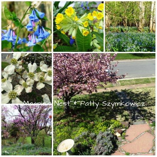 Virginia April Blooms