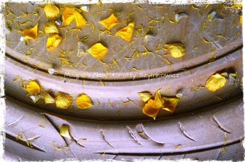 buttercup petals