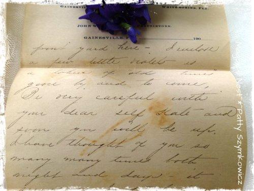 Feb 1906 pressed violets (1)