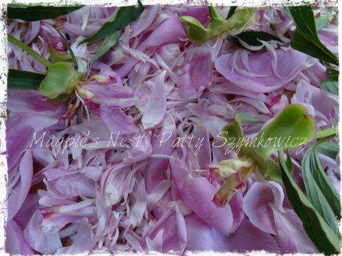 DSC07605 peony petals