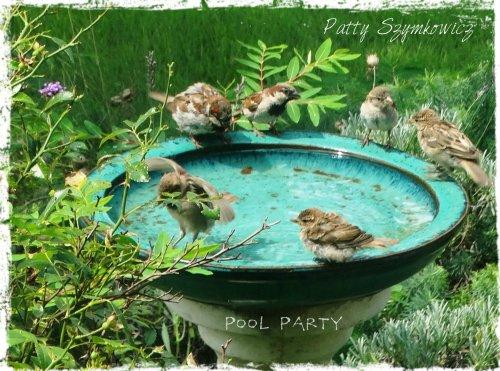 Magpie's Nest Sparrows