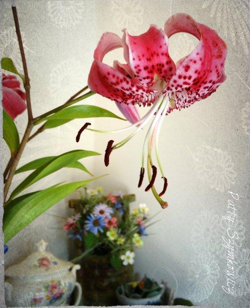 Magpie's Nest Stargazer Lily Shelfie