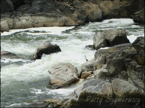 Magpie's Nest Great Falls MD Heron on rocks