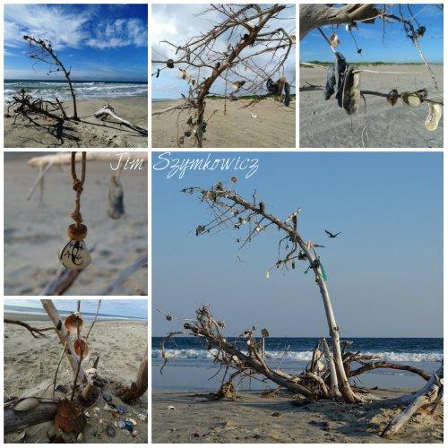Magpie's Nest Ocracoke Island Spirit Tree