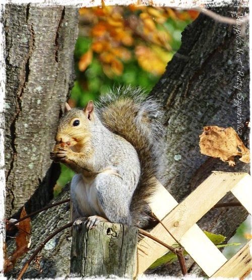 Magpie's Nest Garden Squirrel