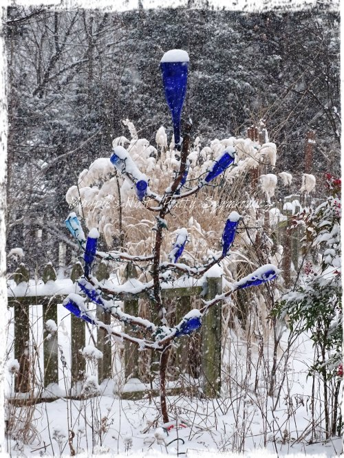 Bottle tree in our garden first snowfall