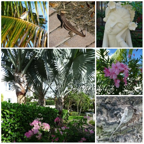 Magpie's Nest Birds and Lizards on TCI