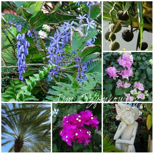 Magpie's Nest TCI flora