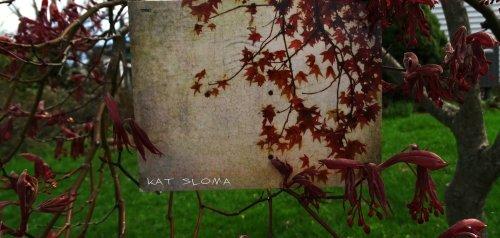 #6 Kat Sloma
