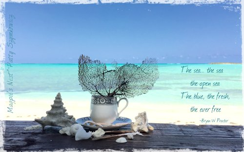 Bambarra Beach cup of sea fan tea