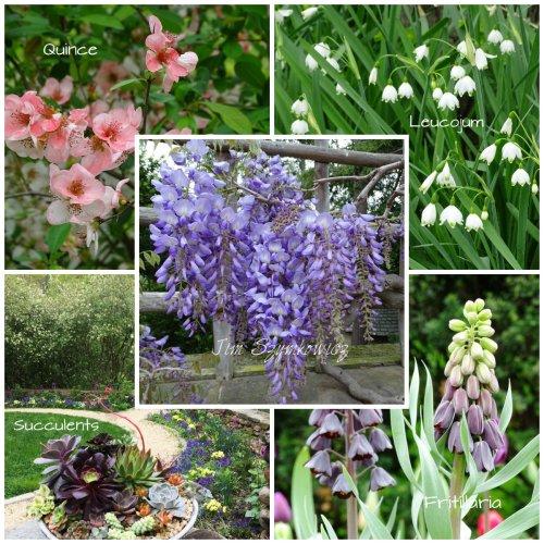 Magpie's Nest Dumbarton Oaks spring blooms