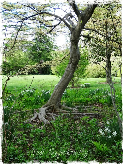 Magpie's Nest Dumbarton tree roots