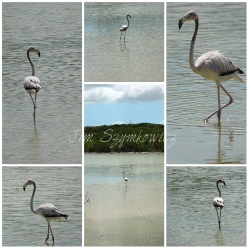 Magpie's Nest one flamingo TCI