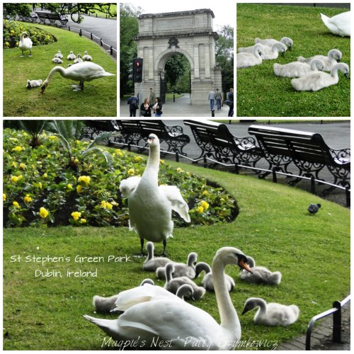 Magpie's Nest St Stephen's Park Dublin SWANS