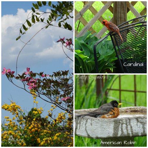 Magpie's Nest Nature