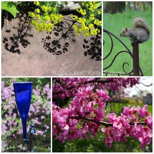 Magpie's Nest Spring in Virginia 2015