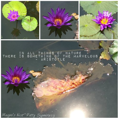 Magpie's Nest Director Moore Waterlily Aristle quote