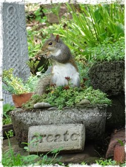 Magpie's Nest garden squirrel CREATE