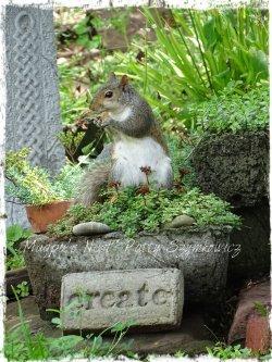 Magpie's Nest garden squirrel CREATE