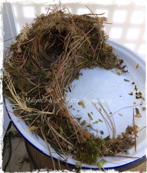 Magpie's Nest Wren's empty nest