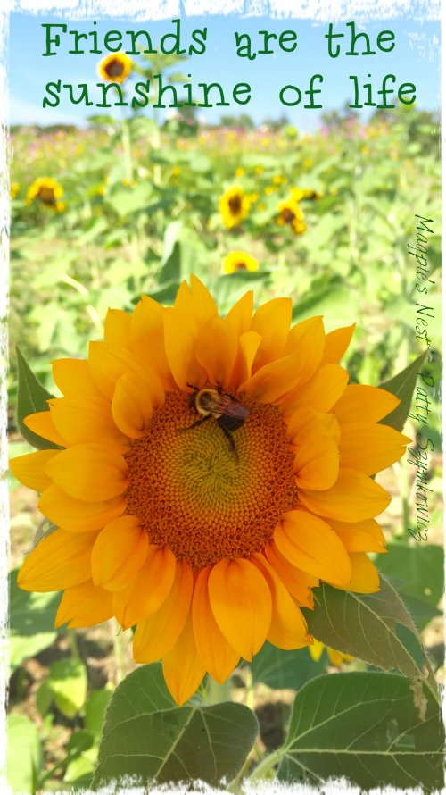 Magpie's Nest Friends Sunflower and Bee