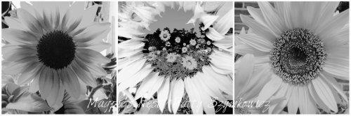 Magpie's Nest Patty Szymkowicz black n white sunflowers