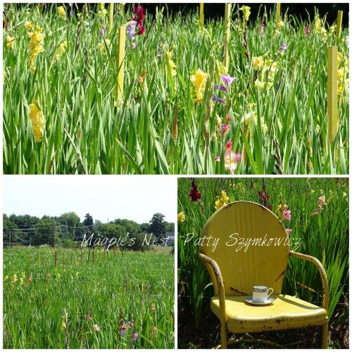 Magpie's Nest Patty Szymkowicz gladiola field