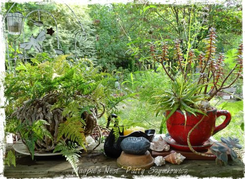 Magpie's Nest Rabbit's Foot Fern Sedum Cup Thyme