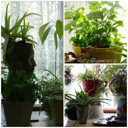 Magpie's Nest Houseplants in