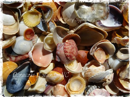 Magpie's Nest Patty Szymkowicz Ocracoke Island Shells