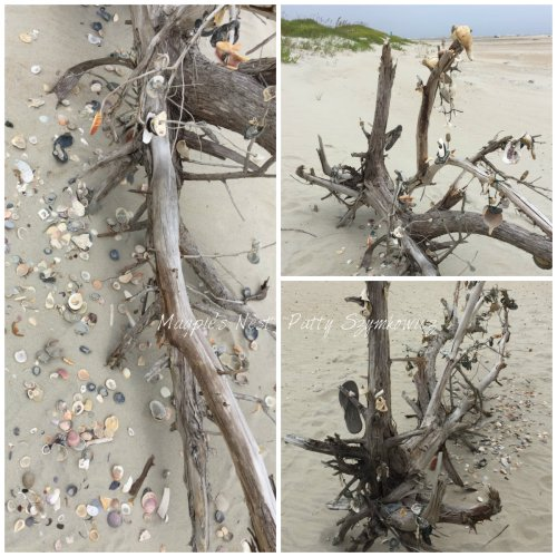 Magpie's Nest Shell tree