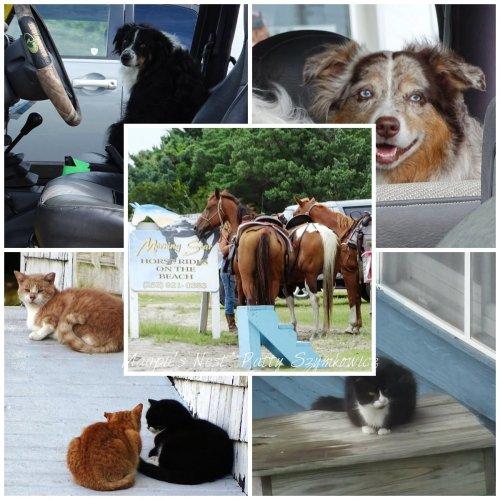 Ocracoke Island Dogs Cats Horses