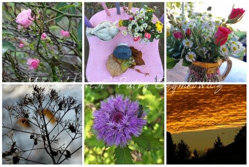 Magpie's Nest Patty Szymkowicz Nov blooms