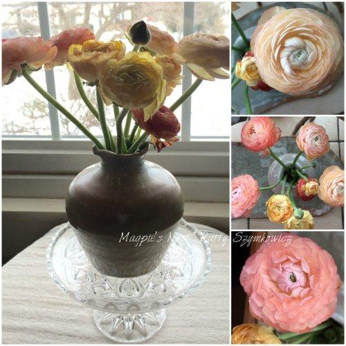 Magpie's Nest Patty Szymkowicz Ranunculus blooms