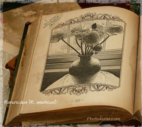 Magpie's Nest Patty Szymkowicz Ranunculus PhotoFunia 2