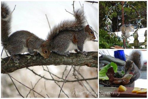 Magpie's Nest Patty Szymkowicz Rascal Squirrels