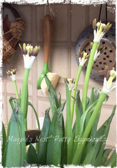 Magpie's Nest Patty Szymkowicz tulip stems