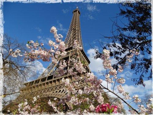 Magpie's Nest La Tour Eiffel