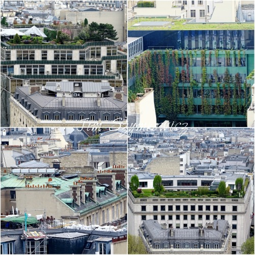 Magpie's Nest Patty Szymkowicz Green Paris Rooftops