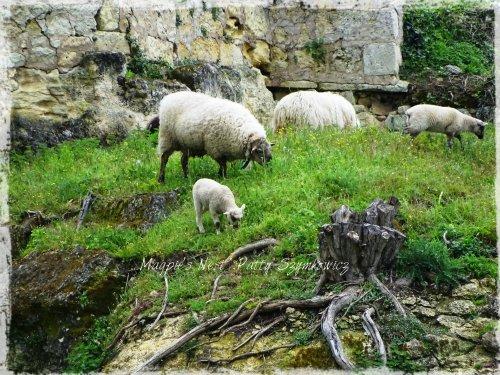 Magpie's Nest St Emilion hillside