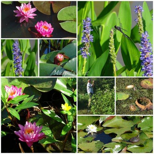 Magpie's Nest Patty Szymkowicz Waterlilies Nature collage