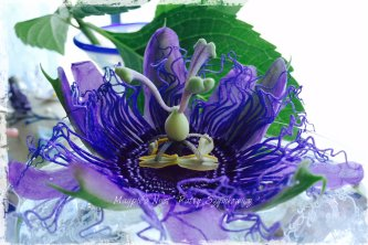 Magpie's Nest Patty Szymkowicz Passion Flower