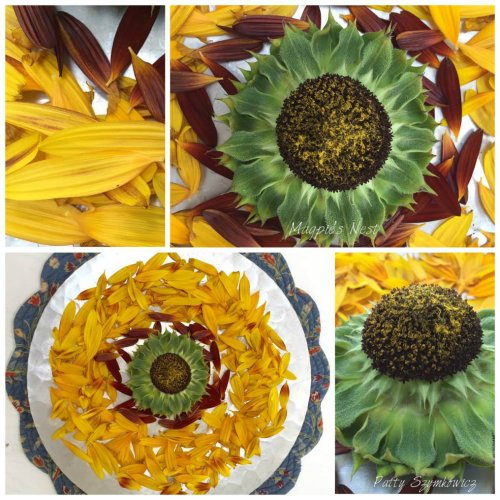 magpies-nest-sunflower-mandala-and-petals