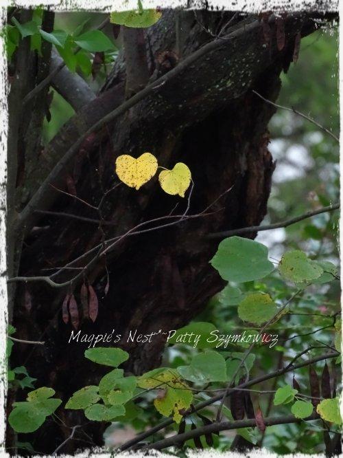 magpies-nest-patty-szymkowicz-golden-redbud-leaves
