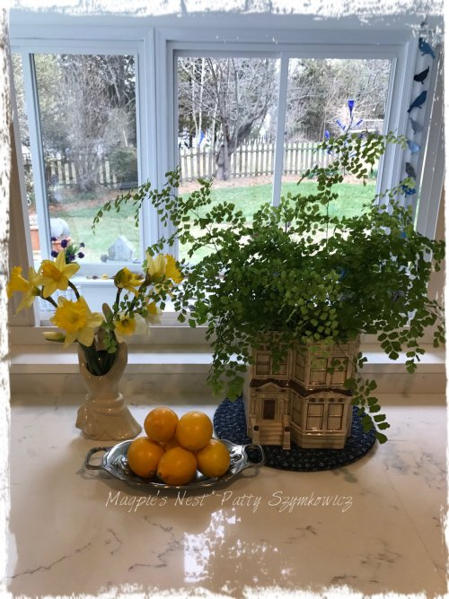 magpies-nest-patty-szymkowicz-meyer-lemons-first-daffs-from-garden
